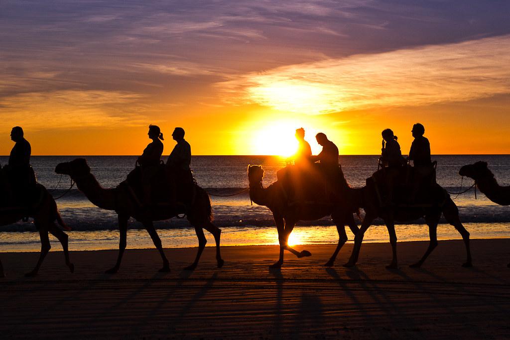 J38 / Silhouette : Les chameaux de Broome