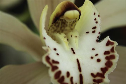 White Orchid (Small)