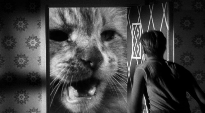 Jack Arnold - The Incredible Shrinking Man