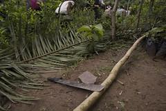 PDI (Bas Congo)