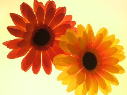 Emmas Flowers