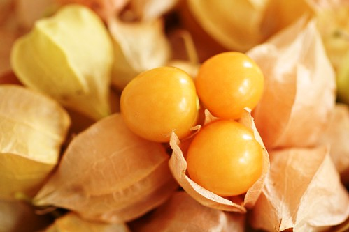 Ground cherries in husks