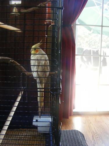 Pappy Bird