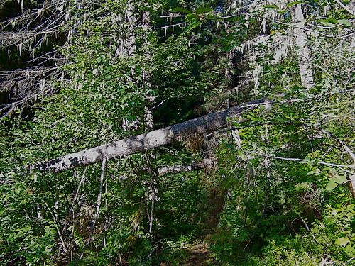 Clear Creek trail 627T