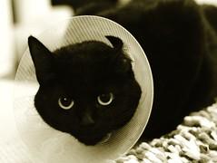 Cat collar