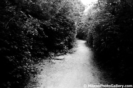 bosco in città milano