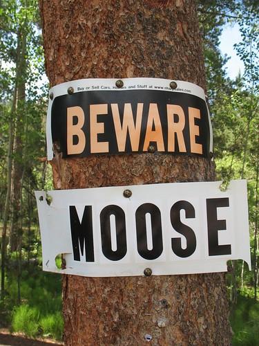 beware moose