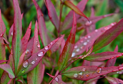 Drops Red & Green