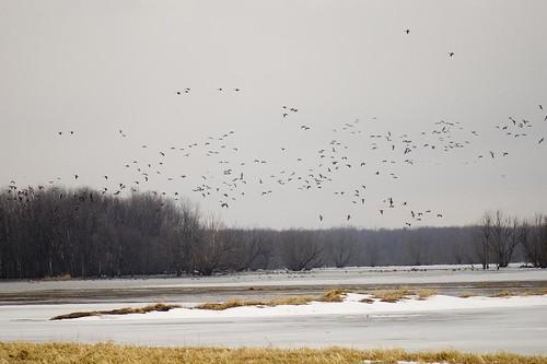 Bird Swamp