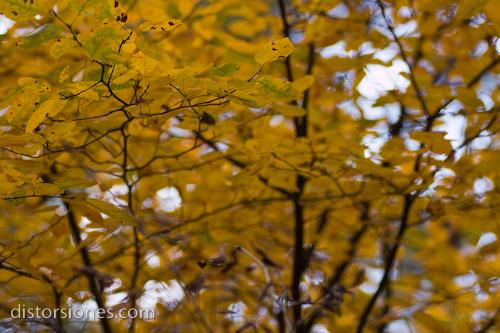 Hojas en el árbol