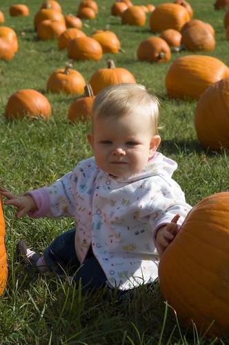 pumpkins 08-18
