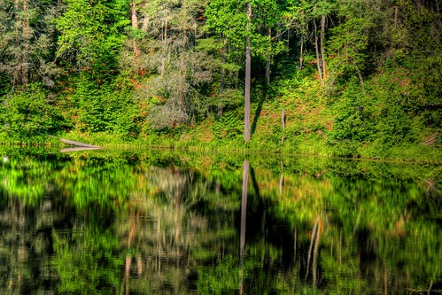 A Forest in the Mirror