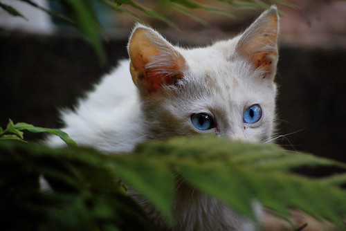 Kitten I