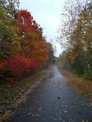 Autumn bikepath