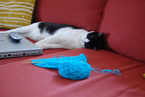 Pudge conked out next to my knitting and laptop