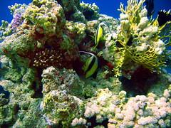 Viaggi e Vacanze Sul Mar Rosso