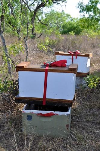 2 nuc boxes
