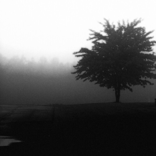 Tree in Fog (by Vili5)
