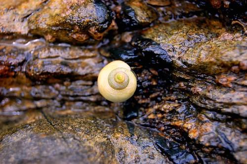 Shell @ Sea