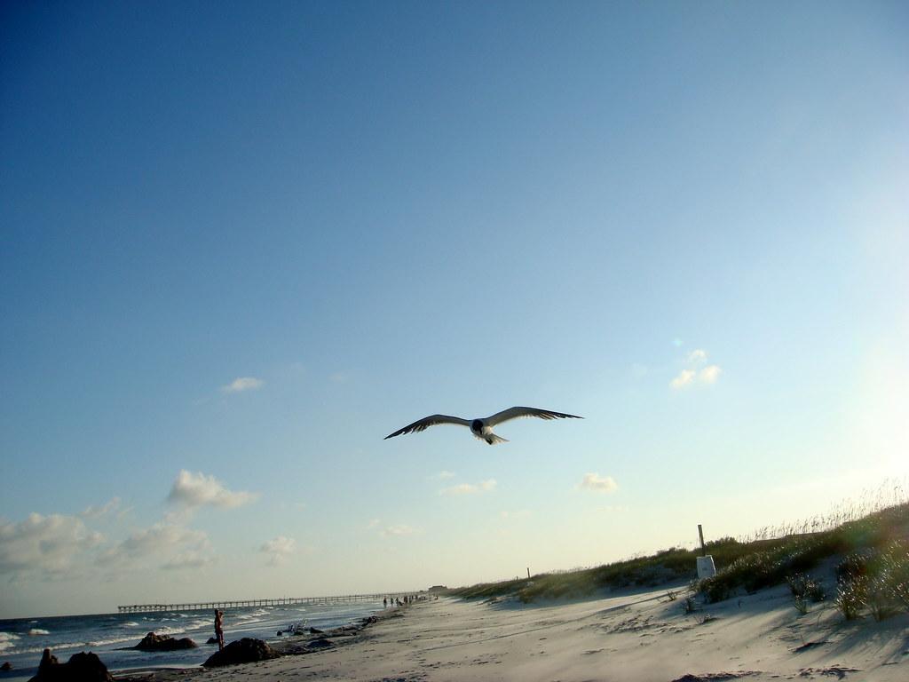 Stalking seagull