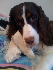Bella and her bone