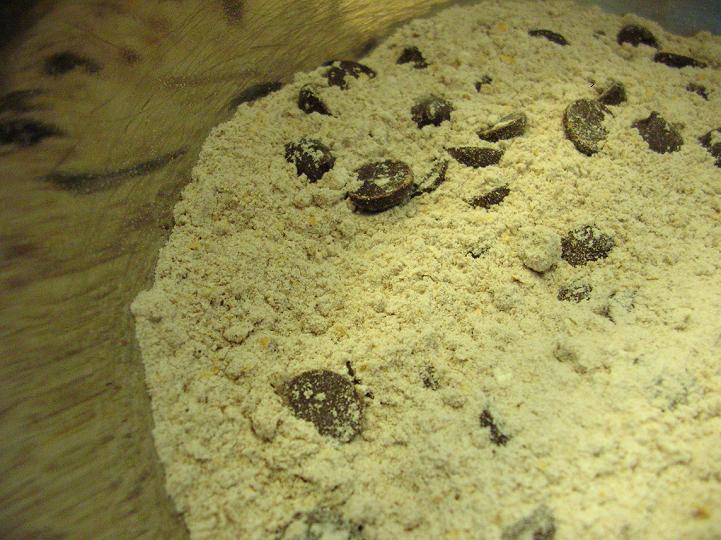 Choc Muffins 1