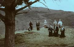Garabandal Pines 1