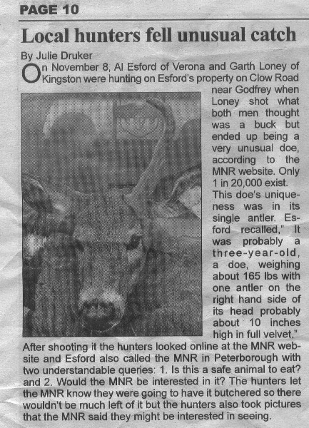 Deer in the news