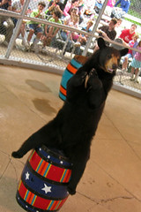 Clark's Black Bears