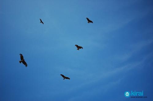 Enoshima kites