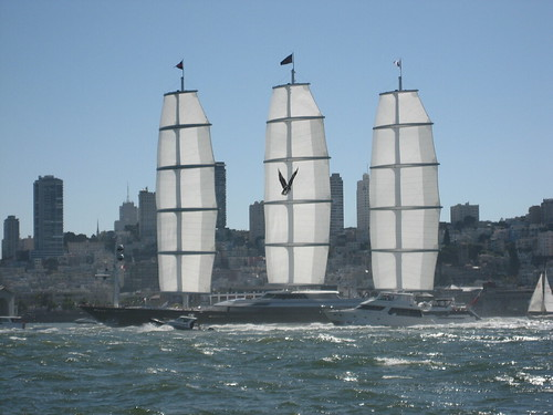 Maltese Falcon in San Francisco by Chris Camporrini