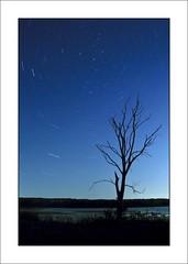 Banner Marsh Stars 2