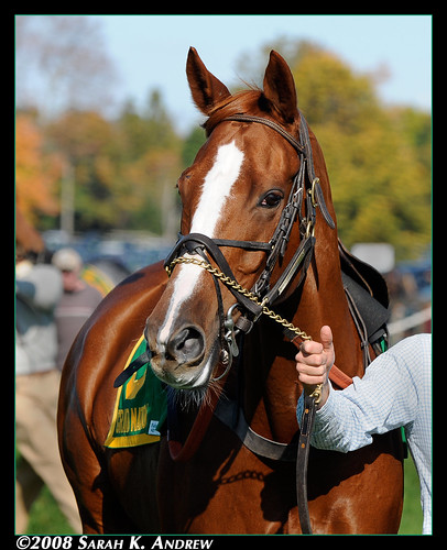 Winner of the 2008 Breeders' Cup Grand National Steeplechase