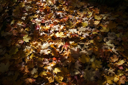 Blanket of Leaves