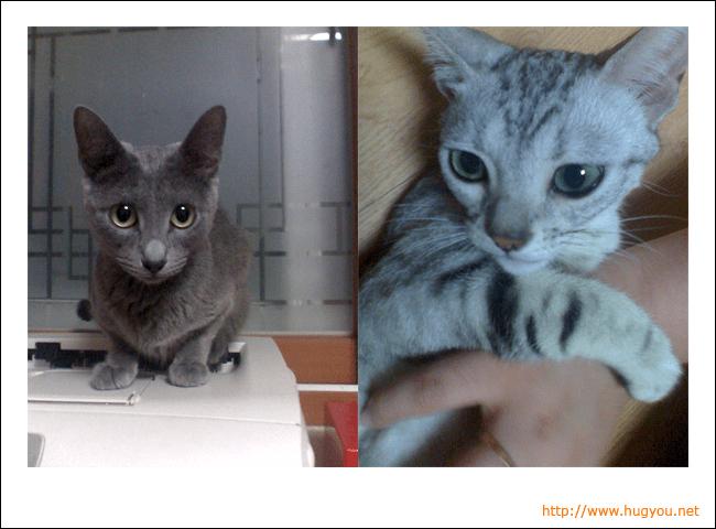 20080727_cats.jpg