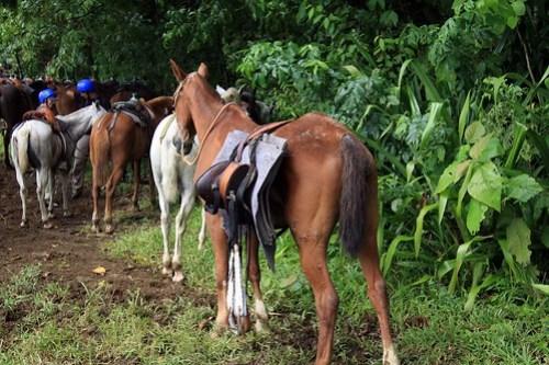 Costa Rica - Día 5 (367)