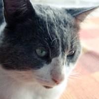 Soigner soi-même les oreilles de son chat