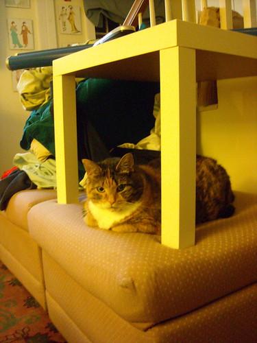 Kitty Fort.JPG