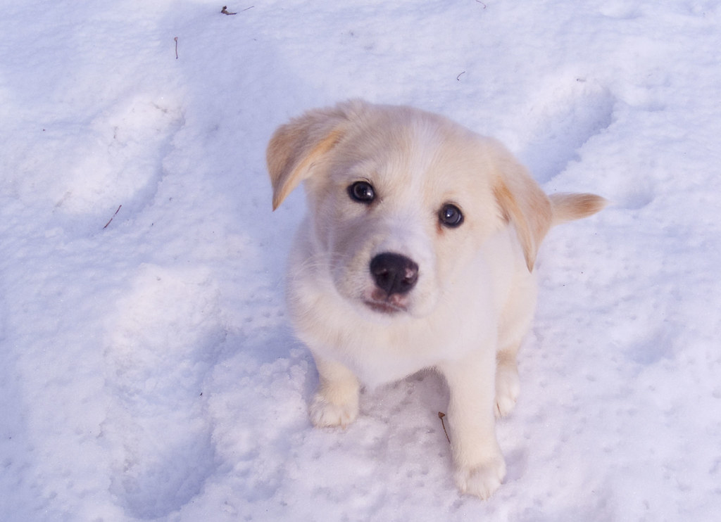 Image of a puppy in snow