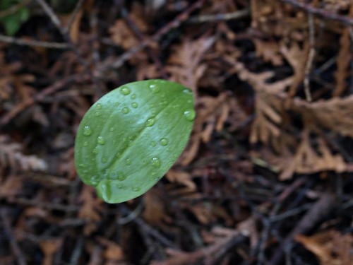 Leaf after Rain Storm