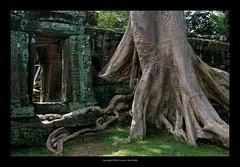Ta Prohm Temple, Cambodia  403