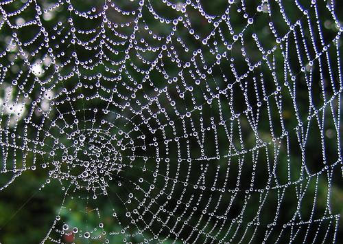 Spider skills