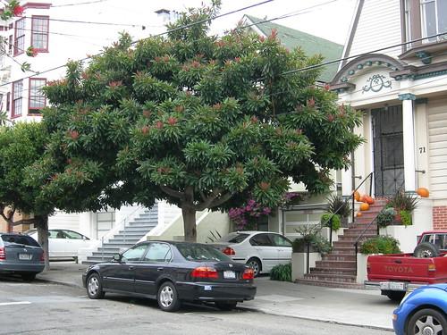 SF streetscape
