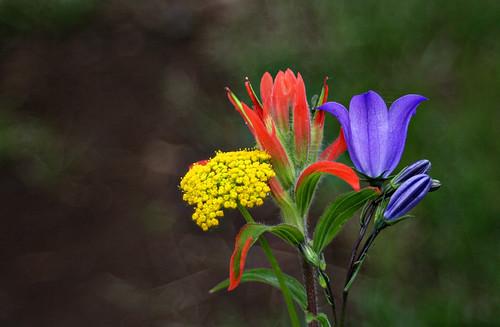 biglake_wildflowers