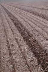 Paused to admire the furrows in the land