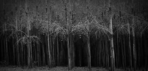 spooky trees 3
