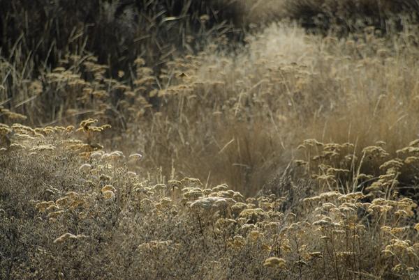 dry wildflowers