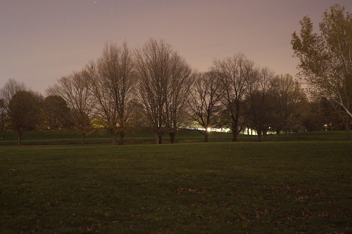 Trees at Arboretum at night