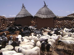 Dogon structures used to house grains and other food.