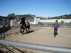 In the round pen